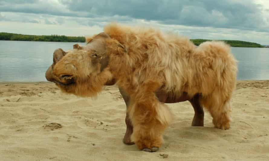 Baby woolly rhino