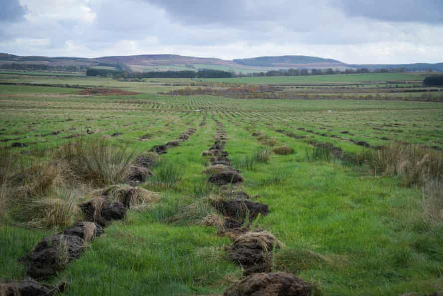 An area of Doddington North