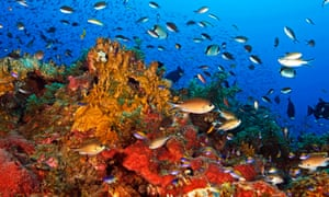 Marine life in the Gulf of Mexico
