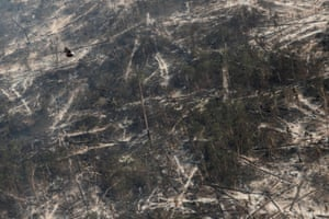 A hawk flies over a tract of burnt Amazon jungle near Porto Velho, Rondonia State