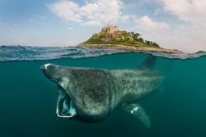 A basking shark.