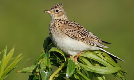 Live fast, die young: study reveals why some birds mature quicker