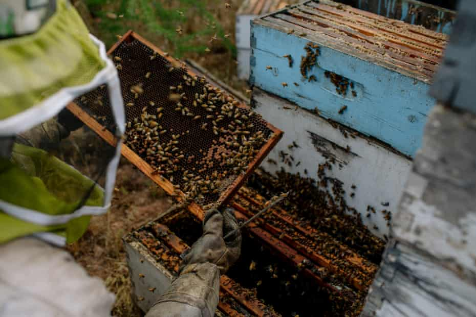 Adam Arp works his hives outside Rye, Arizona, on 8 May 2019.