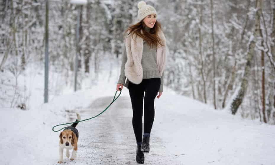 Dog chaser, pet master, nou Bucuresti Sectorul 1 • calculati.ro