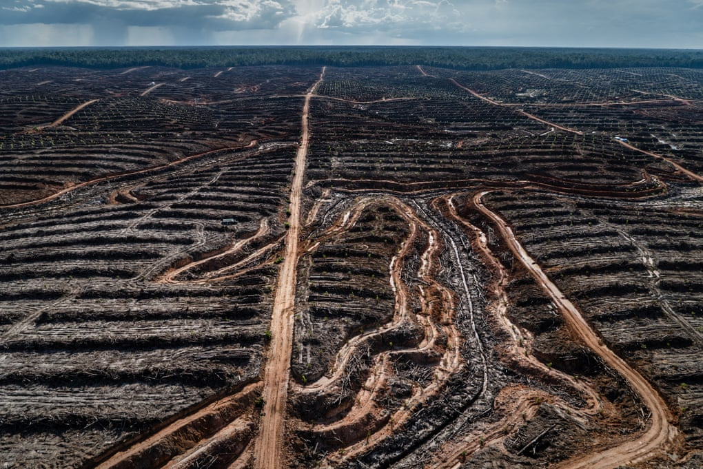 Deforestation in Indonesian to make way for a palm oil concession.