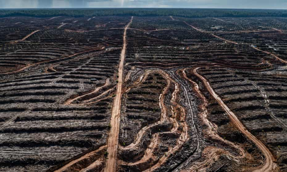 A deforested palm oil concession in Papua, Indonesia