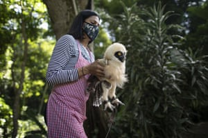 The veterinarian and environmentalist Grecia Marquis cares for a spectacled owl in Caracas, Venezuela