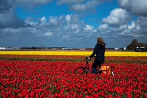 Cycling farmer in Lisse