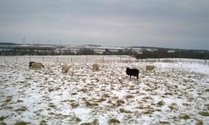 Sheep on Barford Meadow