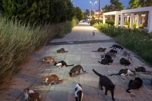 Stray cats eat food left out for them on a pavement in Izmir, Turkey.