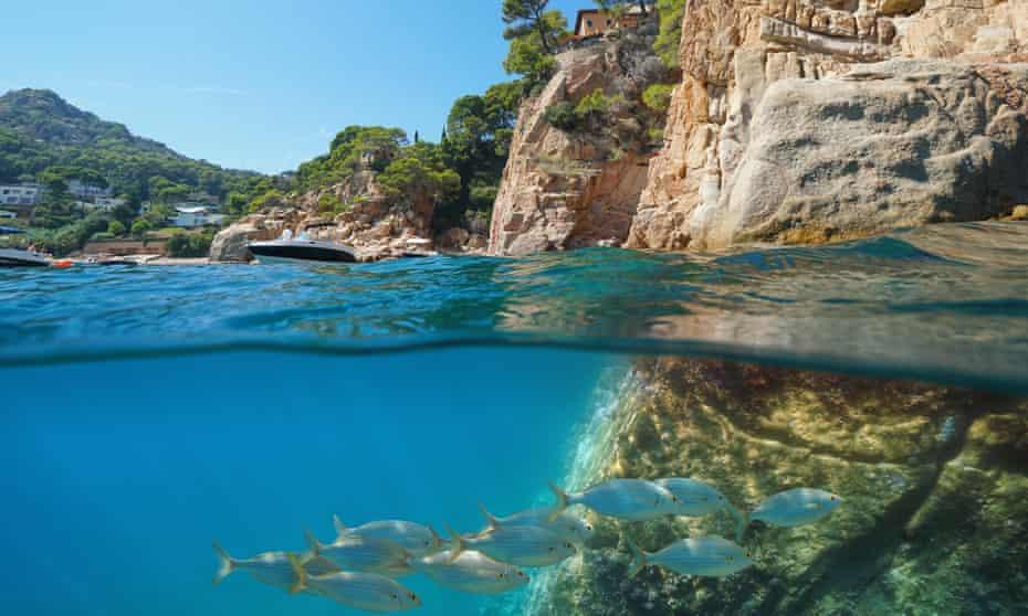 Rocky coast with a school of fish underwater, split view half above and below water surface, Begur, , Costa Brava