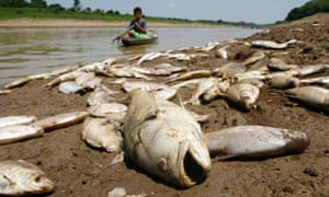 Dead fish on the banks of the Paraná de Manaquiri river, a tributary of the Amazon, near the city of Manaquiri, Brazil, 2009
