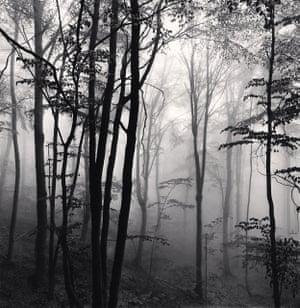 Forest Mist, Study 2, Rigopiano, Abruzzo, Italy 2016, Michael Kenna