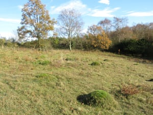 Limestone grassland (with anthills) at Goblin Combe