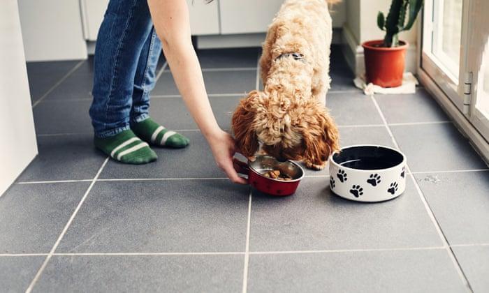 'You're feeding them like athletes': how I tasted success selling raw dog food