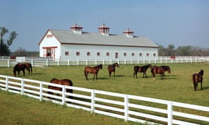 Horses in a white fenced enclosure