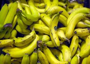 A pile of fairtrade bananas.