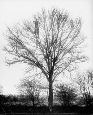 'Photographing a nest in a tree'