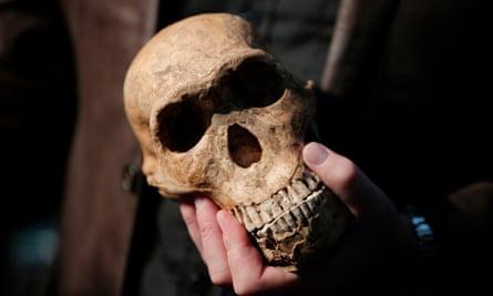 A replica skull of a Homo Naledi Hominin.