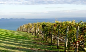 One of the many vineyards overlooking Port Phillip Bay on the Bellarine peninsula.