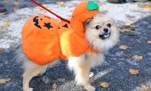 Costumes for pets have gained popularity.