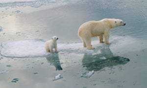 Polar bears in much of Alaska and Russia will be in serious trouble by 2080, the study indicates.