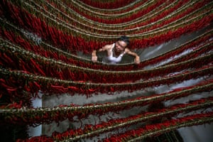 Bijie, China A villager dries chillies on lines in Guizhou province