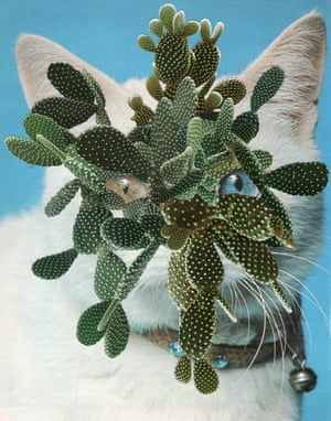 A collage of a cat with cactuses on its face by Stephen Eichhorn