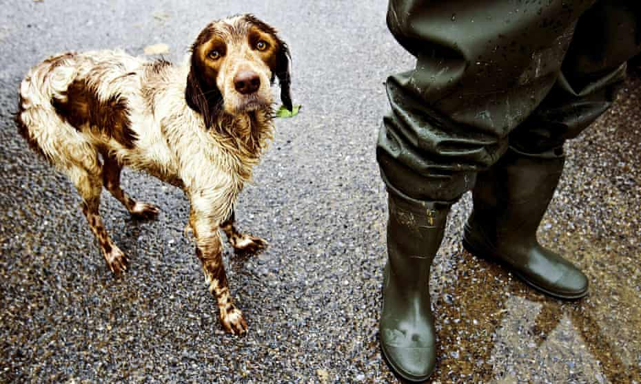 A soaking wet dog stands next to its owner