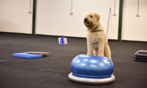 Dog on a fitness ball