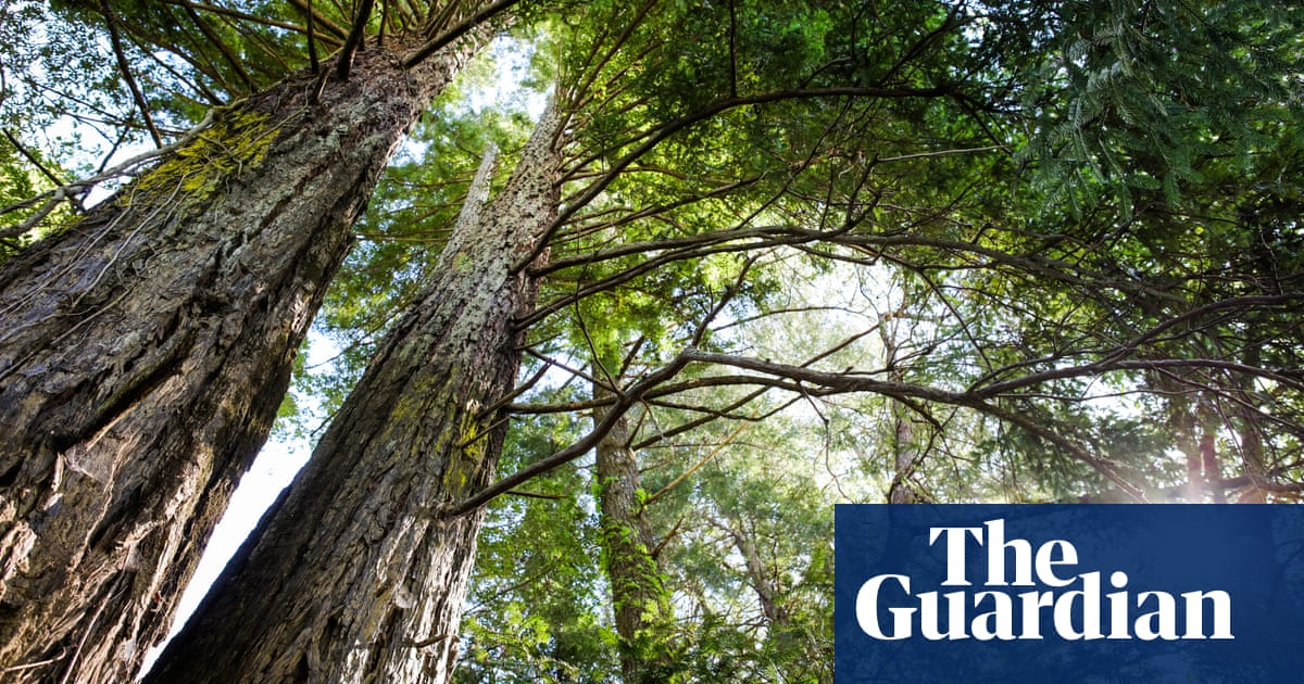 https://www.theguardian.com/environment/2019/jul/04/planting-billions-trees-best-tackle-climate-crisis-scientists-canopy-emissions