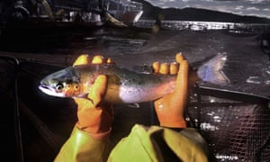 A salmon held in both hands at a fish farm