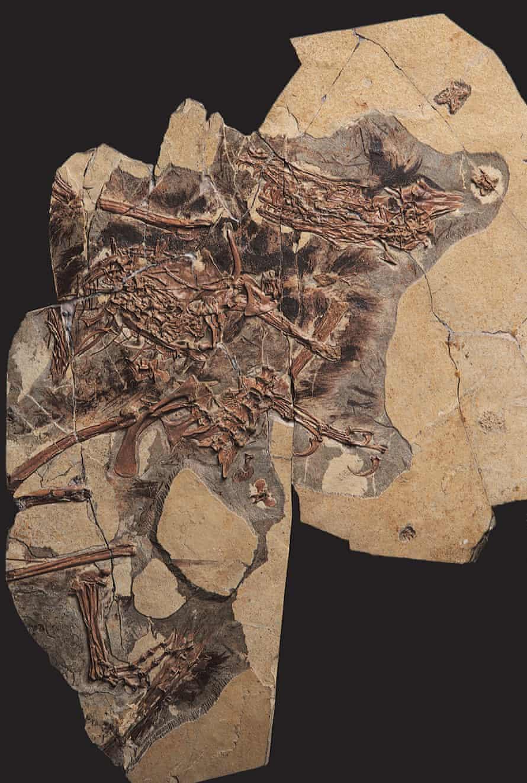 Sinorthosaurus millenii from Liaoning province, northeastern China.