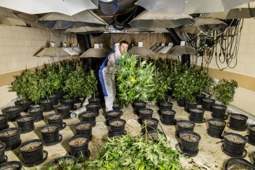 A police officer inside the cannabis farm in the nuclear bunker.