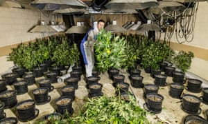 A police officer at a disused underground nuclear bunker in Wiltshire, which was being used as a cannabis farm