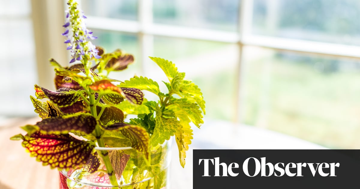 Flower power: how to make the summer last forever | Life and style | The Guardian