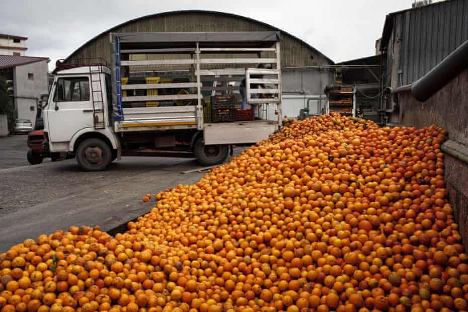 An orange processing factory in southern Italy.