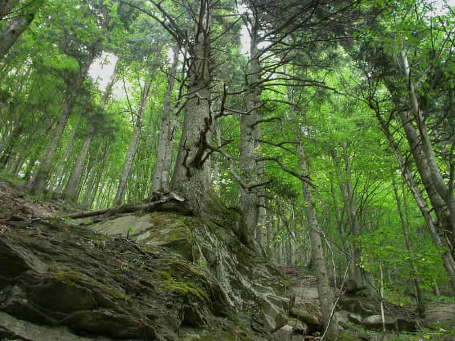 Foreste Casentinesi, Monte Falterona and Campigna national park