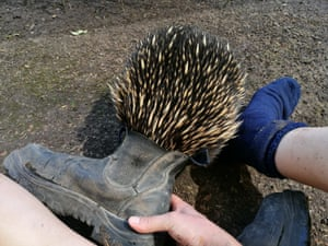 Matilda sniffing a zookeeper's shoe. She is known for her curious nature.