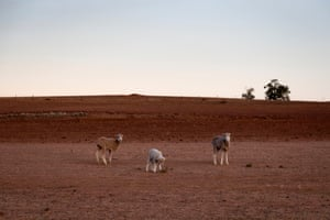 The Jerry family farm Maryborough, outside Coonabarabran.