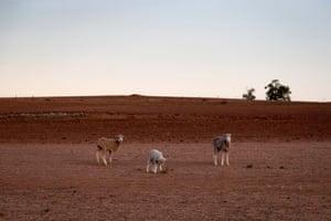 The Jerry family farm Maryborough, outside Coonabarabran.