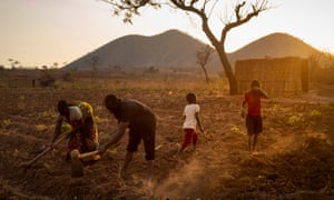 A family in Malawi till dusty soil on a tobacco farm into the evening