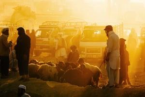 Afghan animal seller waits for customers ahead of the Eid al-Adha in outskirt of Kabul, Afghanistan.