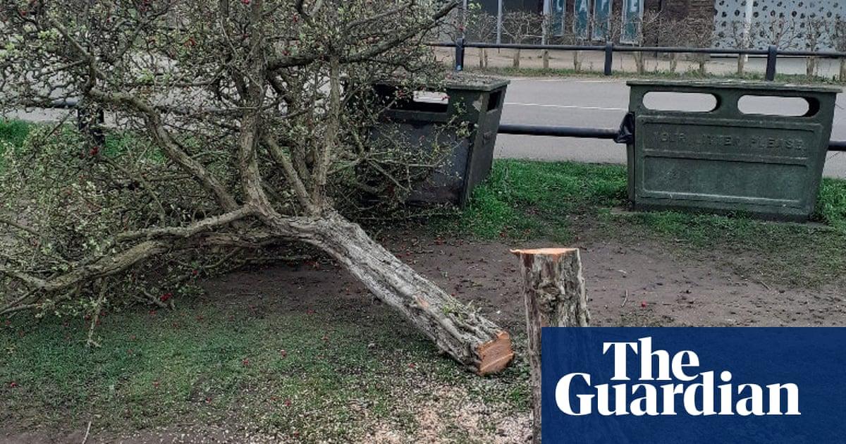 'Chainsaw massacre': Surrey police hunt for phantom lumberjack