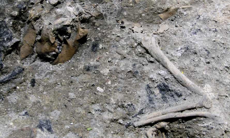 Roman dog skeleton
