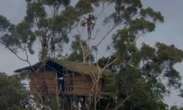 BBC admits treehouse scene from Human Planet series was faked