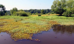 A large floating bed of giant salvinia on Toledo Bend Reservoir, Texas