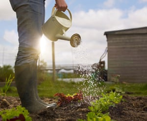 Vegan gardening: a super-organic method that avoids any animal input.