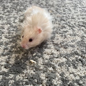 My hamster, Otto, by Elise, nine