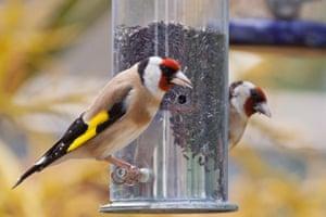 Plus d'oiseaux et d'abeilles, s'il vous plaît! 12 façons faciles et expertes de réaménager votre jardin | Vie et style